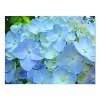 Blue Floral Hydrangeas Flowers art prints Photograph