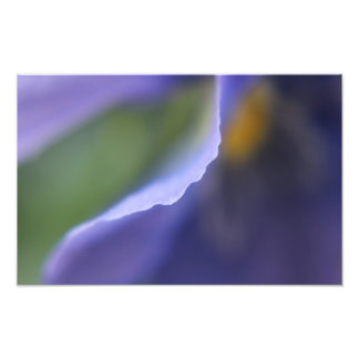 Blue Flower Abstract Photo Print
