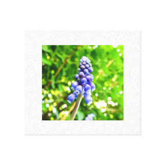 Blue Flower Canvas - Grape Hyacinth