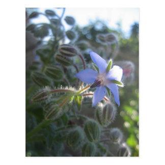 Blue Flower Haze Post Card