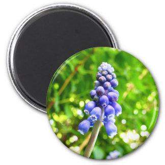 Blue Flower Magnet - Grape Hyacinth