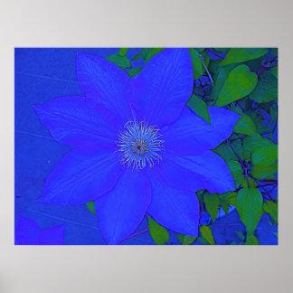 Blue Flower Urchin Print