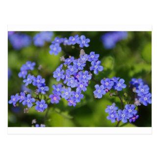 Blue Flowers Blossoms Destiny Peace Love Park Vine Postcard