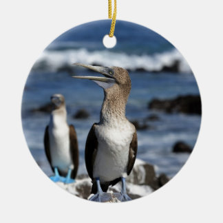 Blue footed Boobies Galapagos Islands Ceramic Ornament