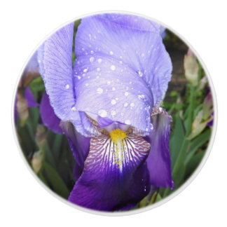 Blue German Irises Ceramic Knob