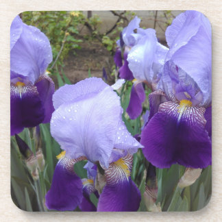 Blue German Irises Coaster