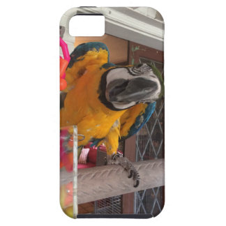 Blue & Gold Macaw Cell Phone Cover for iPhone 5/5S