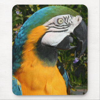 Blue & Gold Macaw Mousepad