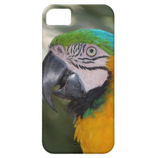 Blue & Gold Macaw Parrot iPhone 5 Case