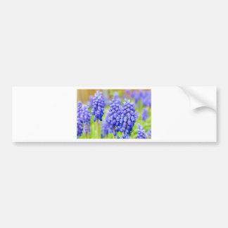 Blue grape hyacinths bumper sticker