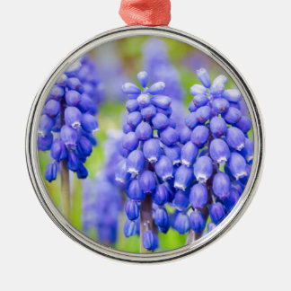 Blue grape hyacinths Silver-Colored round ornament
