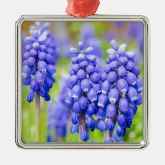 Blue grape hyacinths Silver-Colored square ornament