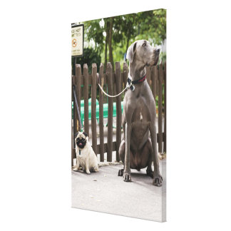 Blue Great Dane and pug dogs on leashes Canvas Print