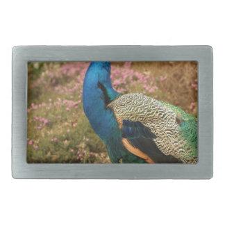 Blue Green and Orange Peacock Belt Buckle