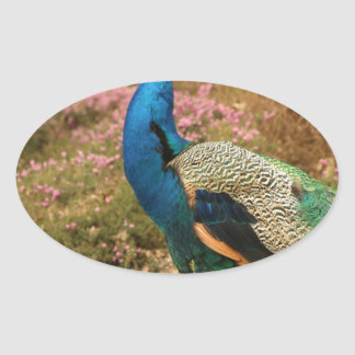 Blue Green and Orange Peacock Oval Sticker