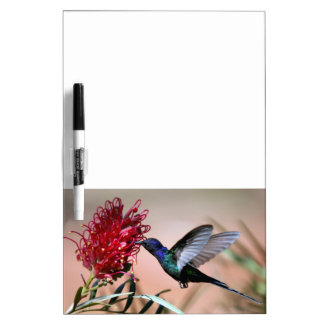 Blue-Green Hummingbird Dry Erase Board Message Bd