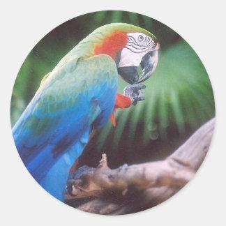 BLUE GREEN PARROT ROUND STICKER