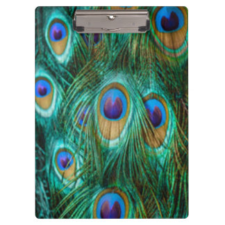 Blue Green Peacock Feathers Clipboard