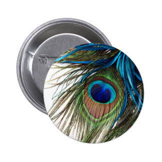 Blue Green Purple Exotic Peacock Feather 2 Inch Round Button