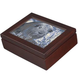 blue guinea pig keepsake box