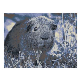 blue guinea pig poster