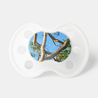 BLUE GUM TREE QUEENSLAND AUSTRALIA PACIFIER