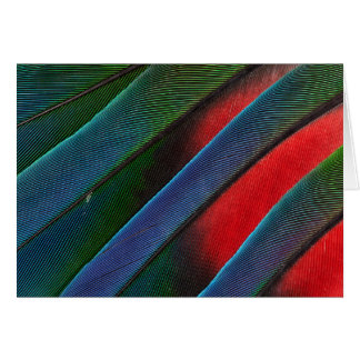 Blue Headed Parrot Feather Design Card