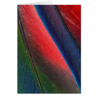 Blue-headed Pionus feathers Card