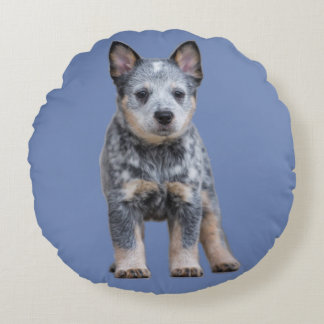 Blue Heeler Couch Pillow 2
