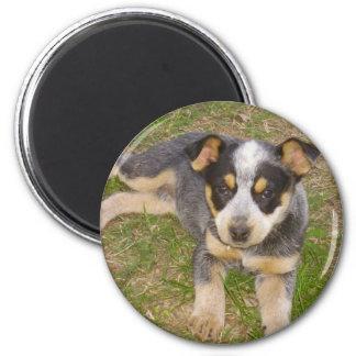 Blue Heeler Puppy Magnet