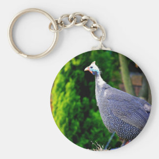 Blue Helmeted Guinea Fowl standing in the sun Basic Round Button Keychain