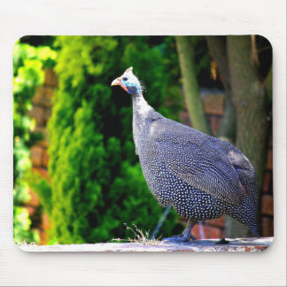 Blue Helmeted Guinea Fowl standing in the sun Mouse Pad
