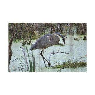 Blue Heron and Catfish Canvas Print