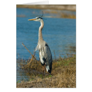 Blue Heron at Pond Card
