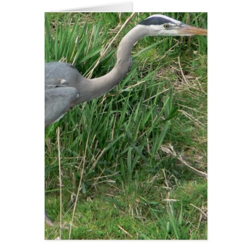 Blue Heron Cards