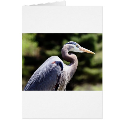 Blue Heron Cards