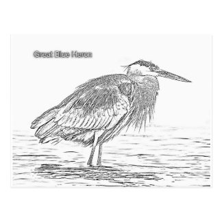 Blue Heron - Color Your Own Postcard