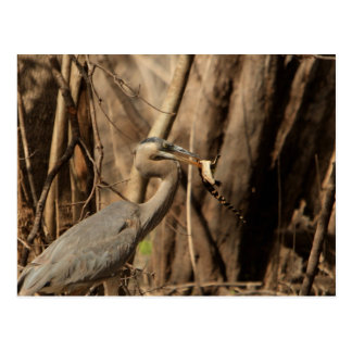 BLUE HERON EATING GATOR POSTCARD