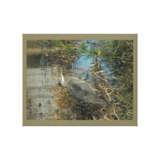 blue heron gallery wrap canvas