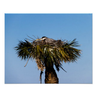 Blue Heron in Nest Poster