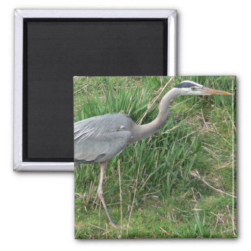 Blue Heron Magnet