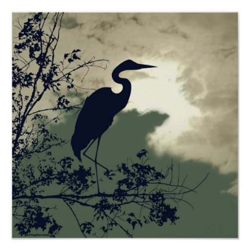 Blue Heron nursery sunset birds watching Posters