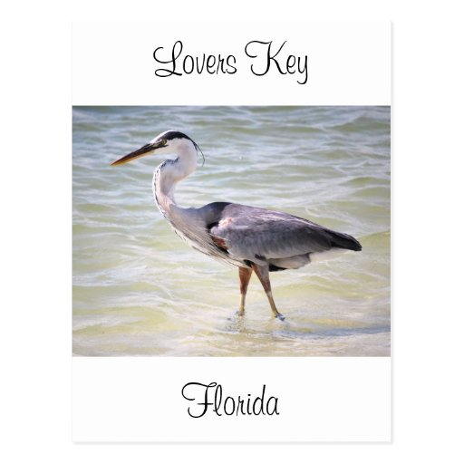 Blue Heron on Lovers Key Post Card