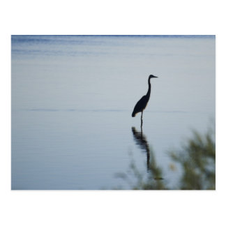 Blue Heron Postcard