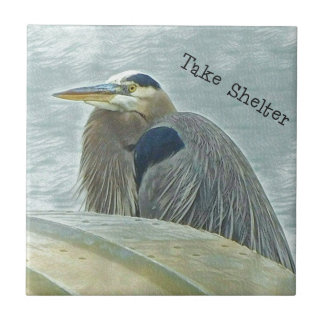 blue heron sheltering from wind behind boat on lak tile