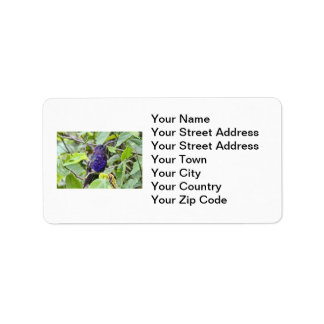 Blue Hummingbird Photo Label