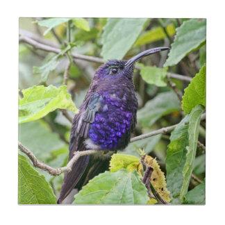 Blue Hummingbird Photo Tile