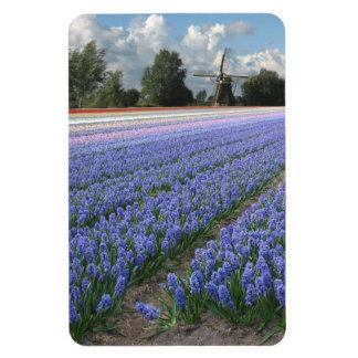 Blue Hyacinth Flower Field Holland Rectangular Photo Magnet