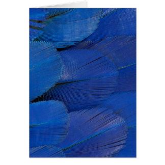 Blue Hyacinth Macaw Feather Design Card