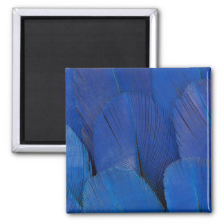 Blue Hyacinth Macaw Feather Design Magnet